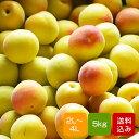 南高梅 完熟 梅干し用 5kg 2L〜4L 完熟南高梅 梅酒用 梅 大分産 ご予約品