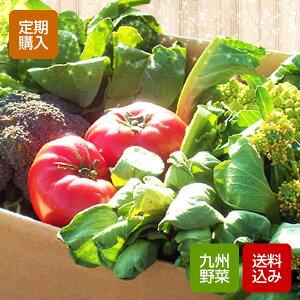 【送料無料】九州の朝とれたて野菜セット福岡からとれたて野菜をご希望の日にお届けします!