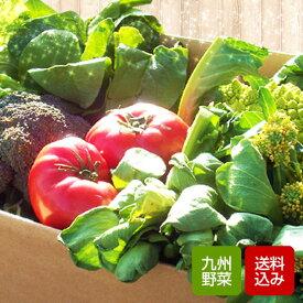 野菜セット 10品 無農薬 減農薬野菜中心 おまかせ詰め合わせ 九州産 西日本 野菜 【送料無料】