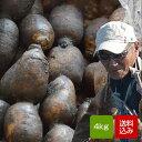 れんこん 無農薬 4キロ 佐賀県白石産 自然農法レンコン 蓮根