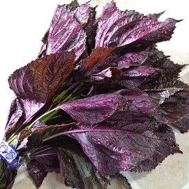 赤しそ 1束 梅干し用 赤紫蘇ジュース用 福岡県芦屋産