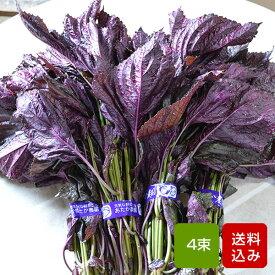 【送料無料】赤しそ 枝付き 1kg 4束 梅干し用 赤紫蘇ジュース用 福岡県芦屋産