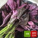 【送料無料】赤しそ 枝付き 2kg 8束 梅干し用 赤紫蘇ジュース用 福岡県芦屋産