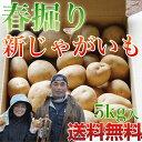 【送料無料】春掘り 新じゃがいも 5kg 男爵芋/出島