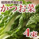 かつお菜 4束 カツオ菜/かつおな/カツオナ/鰹菜 【送料無料】 【年末ご予約商品】
