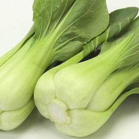 青梗菜 チンゲンサイ(福岡産)