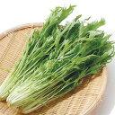 水菜 福岡産