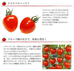 フルーツトマト1.5kgトマトベリーフルーツトマト【送料無料】