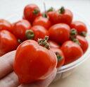 トマトベリー 1袋 フルーツトマト