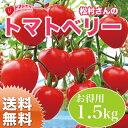 トマトベリー 1.5kg フルーツトマト 【送料無料】