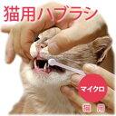 Raku_newteeth_cat