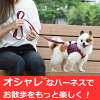 Dog harness ASHU wear Hanes gingham leadset, s (for small dogs) clothing type tunnel ring puppy dog friendly fabric weather ness