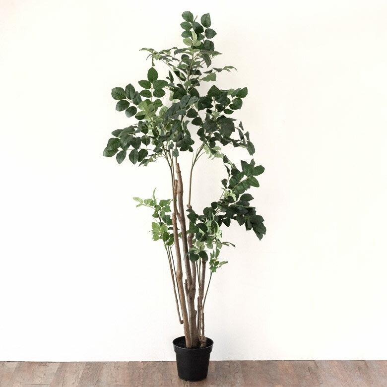 【割引クーポンあり】ポリシャス ポリスキアス フェイクグリーン 高さ200cm 造花 観葉植物 [94135]【 フェイク アーティフィシャルプランツ グリーン ボタニカル インテリア ポリスキアス 木 】