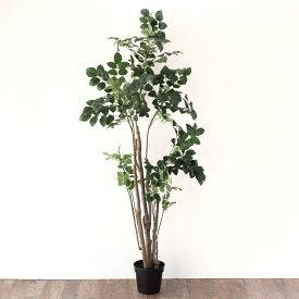ポリシャス ポリスキアス フェイクグリーン 高さ200cm 造花 観葉植物 [94135]【 フェイク アーティフィシャルプランツ グリーン ボタニカル インテリア ポリスキアス 木 】