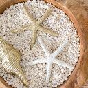 小さなヒトデのオブジェ(2色展開)(64220-64221)【オブジェ オーナメント スターフィッシュ ヒトデ 貝殻 シェル サンゴ…