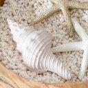 手のひらサイズの巻貝のオブジェ(2色展開)(64230-64231)【オーナメント スターフィッシュ ヒトデ 貝殻 シェル サンゴ …