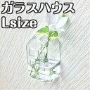 「ガラスハウス Lサイズ」インテリア フラワーベース 花瓶 小さい 家型 ガラス 透明 壁掛け 花器 一輪挿し ガラスベース