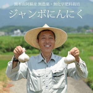 藤本浩二さんのジャンボにんにく 1kg / 無農薬・無化学肥料栽培 / 熊本阿蘇産 / 国産 / 2020年産