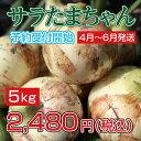 玉ねぎ サラダたまねぎ サラたまちゃん サラたま 熊本県サラたまちゃん5kg