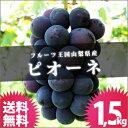 山梨県 ぶどう [ピオーネ 1.5kg] 送料無料 山梨産 ブドウ ぶどうばたけ