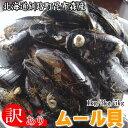 【サイズ不揃い】北海道釧路昆布森産ムール貝(カラスガイ)1kg 訳あり