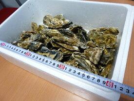 牡蠣70個前後/訳あり/ハネ/北海道/釧路町仙鳳趾/生牡蠣 4キロ 安心配送の生食用/#元気いただきます