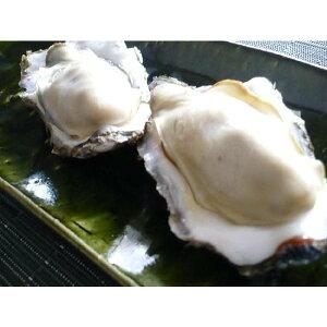 5L登場/10個/北海道・活牡蠣(カキ)(殻付き 生食)牡蠣・厚岸西岸 仙鳳趾/牡蛎300グラム〜 殿牡蠣