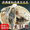 訳あり規格外牡蠣【8kg詰】/北海道/知内町/生牡蠣/殻付き/生食用