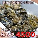 牡蠣70個前後/訳あり/ハネ/北海道/釧路町仙鳳趾/生牡蠣 4キロ 期間限定感謝価格中