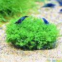 【新春SALE】【無農薬】プレミアムグリーンモス丸石付き 直径約5cm