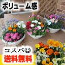 【送料無料※本州のみ】【誕生日】【お祝い】春から初夏の季節の花寄せ植え〜「87naviの寄せ植えシリーズ」【アレンジ…