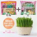 【送料無料】【良質な種】【厳選専用土】【詰めたて新鮮】猫草専用の「栽培用 良質な種とふわふわ土のセット」(直径10…