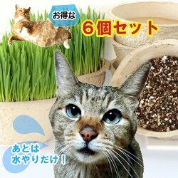 あとは水やりだけ、簡単猫草6鉢セット