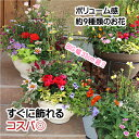 【送料無料】ボリュームある季節の花デザイナー寄せ植え「87naviブランド」秋 冬 誕生日 お歳暮 おしゃれ 初心者可 入…