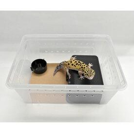 オリジナル レオパ飼育セットMサイズ(シェルター・水入れ付き)