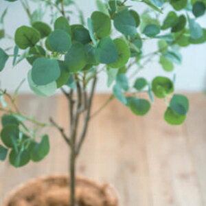 ◆法人様限定販売【メーカー直送】ユーカリ 150cm 造花 観葉植物 インテリア 人工観葉植物 フェイクグリーン ユーカリ  po-81022