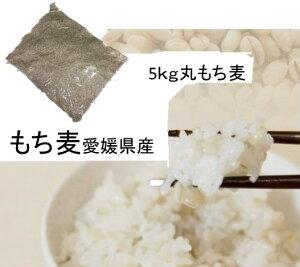 もち麦(丸) 5kg 愛媛県産 白いもち麦 雑穀米 ダイエット  国産 大麦 もちむぎ 食物繊維  ぷちぷち ご飯 健康 美肌効果 穀物