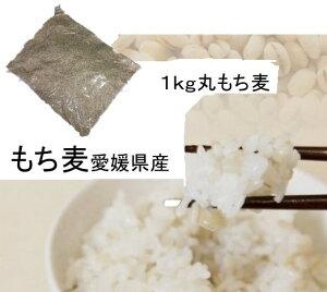 もち麦(丸) 1kg 愛媛県産 白いもち麦 雑穀米 ダイエット  国産 大麦 もちむぎ 食物繊維 ぷちぷち ご飯 健康 美肌効果 穀物