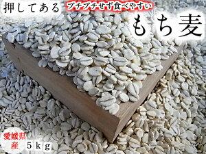 もち麦(押し) 5kg 愛媛県産 白いもち麦 当店オリジナル 送料無料 雑穀米 ダイエット 国産 大麦 もちむぎ 食物繊維 押してある もっちり ご飯 健康 美肌効果 穀物 低カロリー 美肌 簡単 も