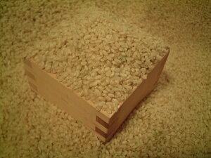 発芽玄米 1kg 岐阜県産 雑穀米 国産 コシヒカリ ダイエット 国内産 発芽玄米