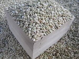 発芽青玄米 1kg 福岡県産 雑穀 雑穀米/食物繊維 マグネシウム 発芽青玄米 国産 発芽玄米