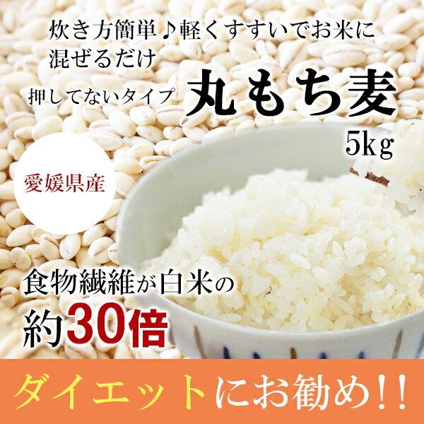 もち麦(丸) 5kg 白いもち麦 雑穀米 ダイエット 愛媛県産 国産 大麦 もちむぎ 食物繊維 ぷちぷち ご飯 健康 美肌効果 穀物
