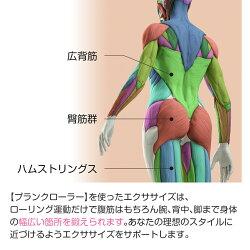 プランクローラーの腹筋以外への効果2