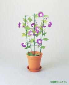 ☆ニチカン☆ フラワー支柱 小 45cm つる支柱 あさがお 4・5号鉢向け リングが移動できるのでツルが巻き易い! 朝顔やつる性植物に最適です。クレマチス、ブーケンビリア、フウセンカズラ、ポトスなどの草花やナスに ガーデニング 園芸資材