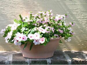 イタリア製 植木鉢 アンティークプランターボール 32cm テラコッタ 10号 デローマ社 素焼き鉢 浅鉢 ホワイト鉢 プランター 陶器鉢 パンジーやビオラ、プリムラ、ジュリアンにおススメです 園