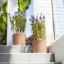 イタリア鉢 ホワイトシリンダーポット 25cm イタリア製 植木鉢 テラコッタ 陶器 デローマ社 素焼き鉢 園芸 ガーデニン…