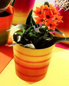 【残り僅か】☆在庫処分☆ ドイツ製 鉢カバー ダラス・サマー イエロー・オレンジ 16cm 4.5号鉢用 ハイドロカルチャー(水耕栽培)に最適な鉢 おしゃれ 陶器鉢 Soendgen KeramiK社製  観葉植物に