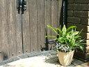 スペイン鉢 ローザ 17cm テラコッタ 植木鉢 シンプルな深型の植木鉢 陶器鉢 素焼き鉢 園芸 ガーデニング おしゃれ プ…