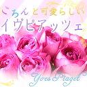 バラ 花束 イヴピアッツェ20本花束です。お祝いや誕生日などのプレゼントにおすすめ/父の日/クリスマス/還暦/結婚記念日/フラワーギフト/贈り物/イブピアッツェ