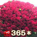 """【送料無料】サプライズ バラ 花束 365本 無料のメッセージカード付き花言葉は""""毎日君が恋しい""""相手を気遣うプレゼ…"""